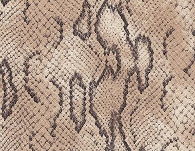 Leather Snake Python